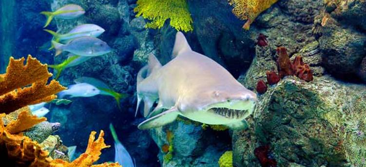 Florida Aquarium - spændende oplevelse for både børn og voksne