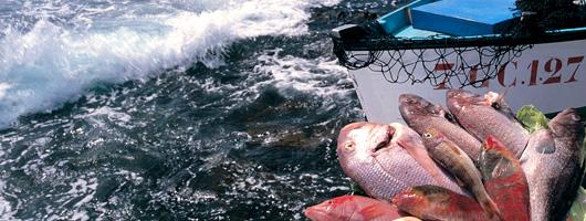 På Agaetes mange fiskerestuaranter kan man dagligt nyde friskfangede fisk og skaldyr